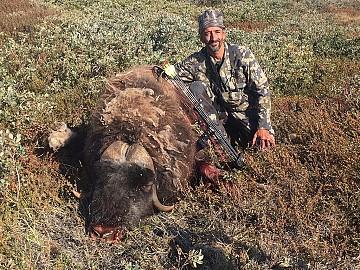 Groenlandia caza con Arco Muskox