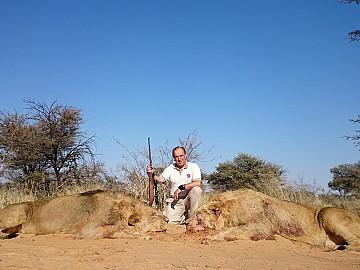 SUDAFRICA LEONES A LA HUELLA EN EL KALAHARI
